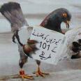 Edugamer101